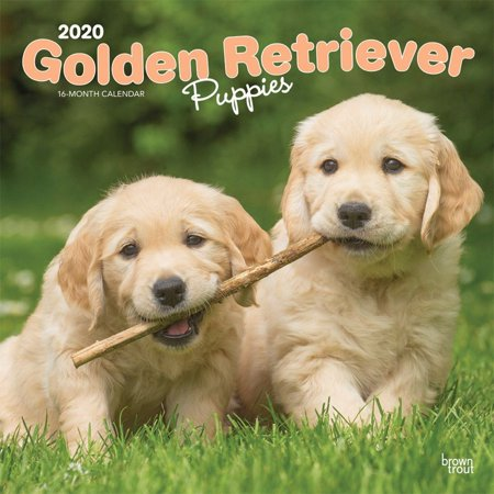 Calendars Golden Retriever Puppies Wall Calendar FSC Certified Paper - All Major & Significant Holidays Puppies Wall Calendar