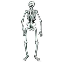 Jointed Skeleton for Halloween