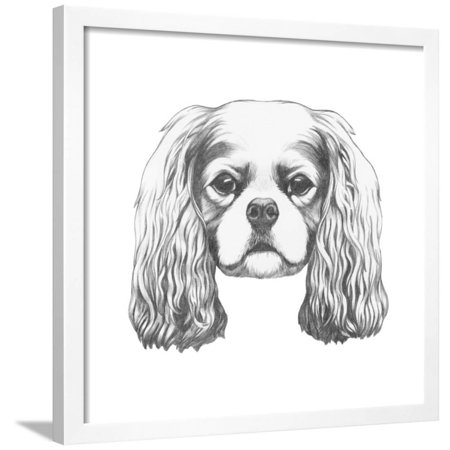 Tri Cavalier King Charles Spaniel - Portrait of Cavalier King Charles Spaniel. Hand Drawn Illustration. Framed Print Wall Art By victoria_novak