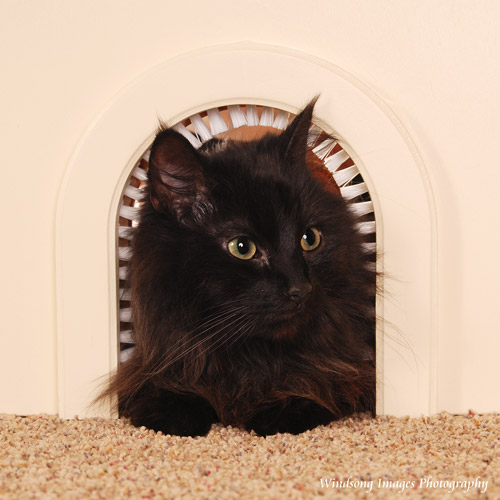 Cat-Hole Pet Door Cat Furniture