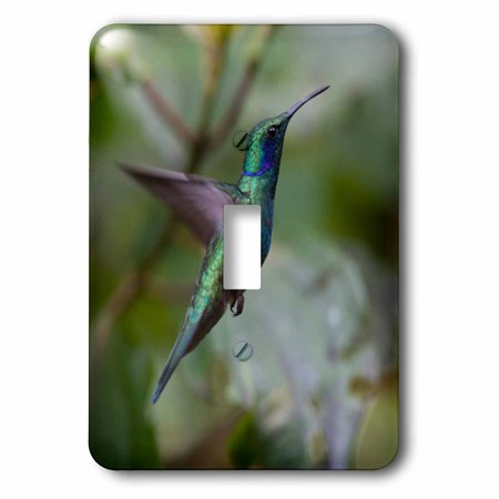 Humminbird Switch - 3dRose Green Violet-ear Hummingbird. Monteverde. Costa Rica. Central America. - Single Toggle Switch