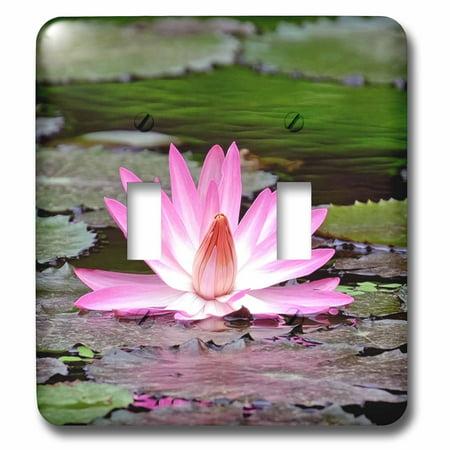 3drose Pink Asia Lotus Flower Buddha Symbol Double Toggle Switch