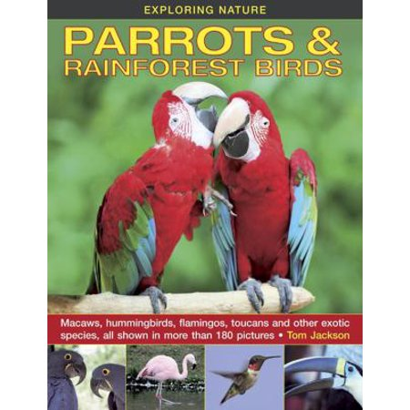 Parrots   Rainforest Birds  Macaws  Hummingbirds  Flamingos  Toucans And Other Exotic Species  All Shown In More Than 180 Pictures