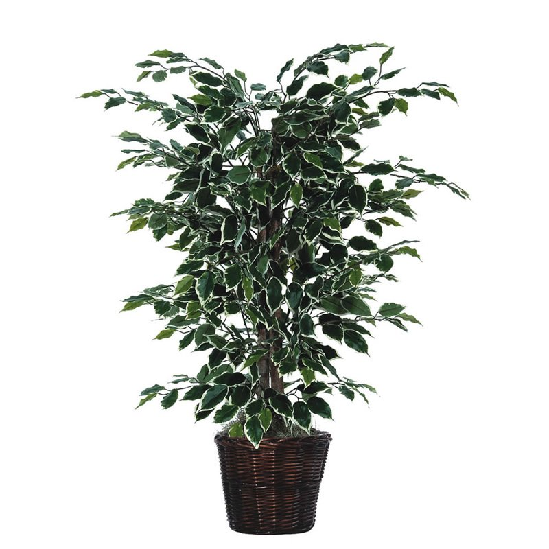 Vickerman 4' Artificial Variegated Ficus Bush in a Rattan Basket