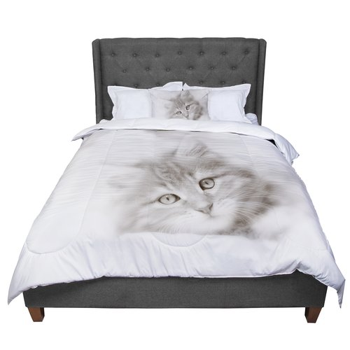 East Urban Home Monika Strigel Main Coon Kitten Cat Comfo...