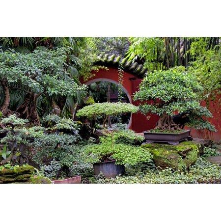 China 10MKm2 Collection - Bonsai Trees Print Wall Art By Philippe (Art Bonsai Trees)