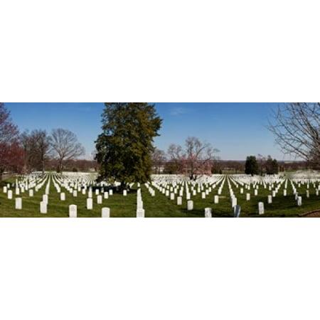 Headstones In A Cemetery Arlington National Cemetery Arlington Virginia Usa Canvas Art   Panoramic Images  36 X 13