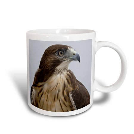 3dRose USA, Alaska, Ketchikan. Red-tailed hawk bird - US02 BJA0235 - Jaynes Gallery, Ceramic Mug, 15-ounce