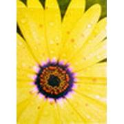 Yellow Daisy Summer Garden Flag