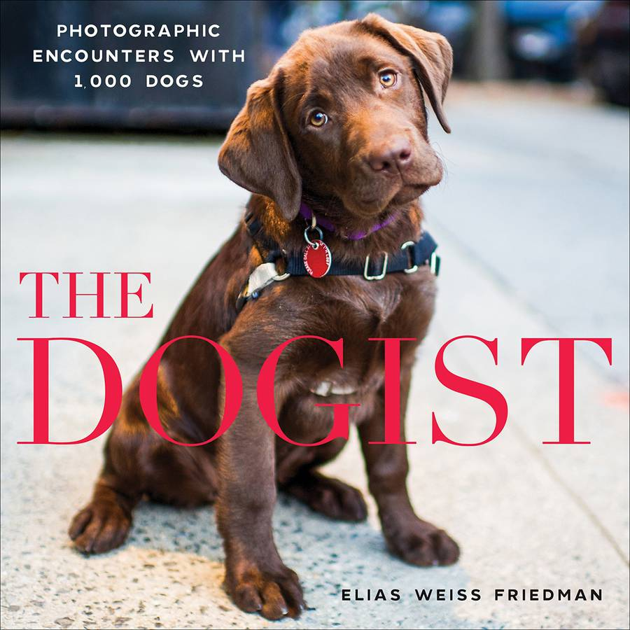 Artisan Books The Dogist