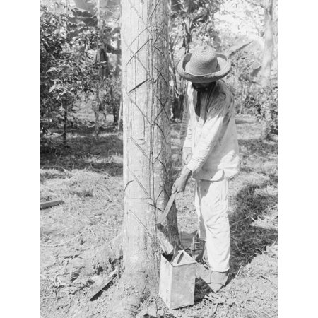 Tapping Rubber Tree with machete (Old Way) Print Wall