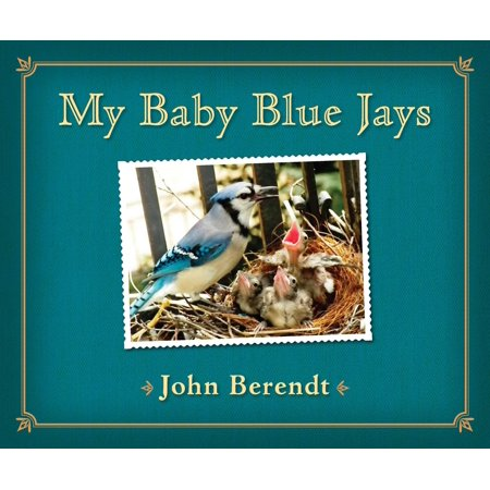 Animals Adults And Babies (My Baby Blue Jays)