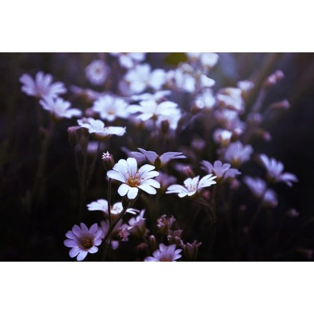 Delicate Blooms - LAMINATED POSTER Bloom Blur Delicate Close-up Blossom Field Color Poster Print 24 x 36