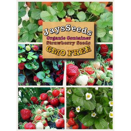 Organic Container Everbearing Strawberry 200 Seeds - Strawberry Boxes