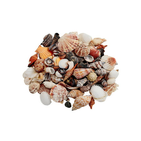 Colorations Sea Shells, Medium - 1 lb. (Item # MDSS) Beach Inspired Sea Shell