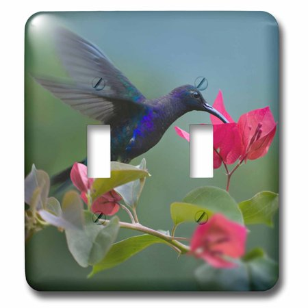 Humminbird Switch - 3dRose Violet Sabrewing hummingbird drinking from a flower. - Double Toggle Switch