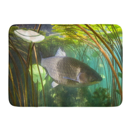 GODPOK Freshwater Fish Grass Carp Ctenopharyngodon Idella in The Beautiful Clean Pound Underwater Shoot Wild Rug Doormat Bath Mat 23.6x15.7 inch