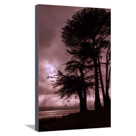 Moonstone Beach Tree Silhouettes Stretched Canvas Print Wall Art By Vincent James