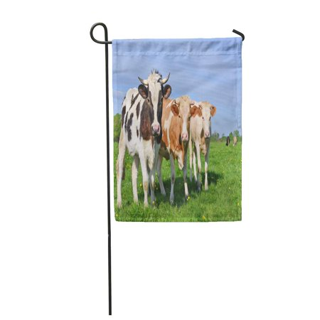 LADDKE Grass Cows on Summer Pasture Agriculture Beast Garden Flag Decorative Flag House Banner 28x40