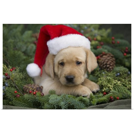 Great BIG Canvas | Rolled Ron Dahlquist Poster Print entitled Labrador Retriever Puppy With Santa Hat In A Christmas Wreath; Maui, Hawaii