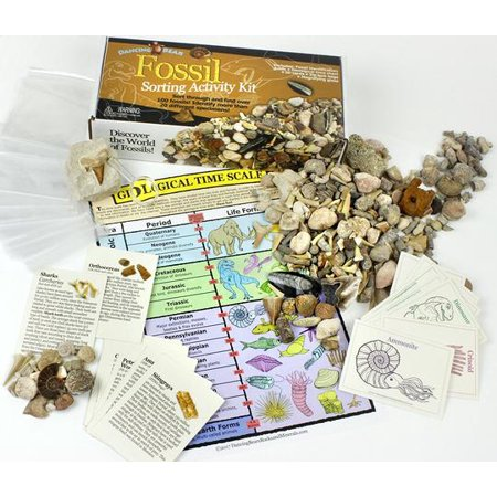 Fossil Collection Sorting Activity Kit with over 100 Pcs (more than 20 different fossil varieties!), Educational ID Sheet, Color ID Cards, Bags, Magnifying Glass, and Shark Teeth, Dancing Bear Brand