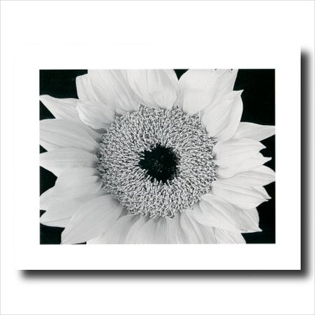 Yellow Sunflower B/W Photo Wall Picture Art Print