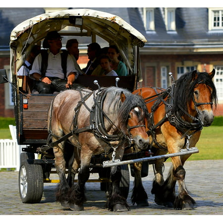 Canvas Print Horse Drawn Carriage Livestock Drag Work Harness Stretched Canvas 10 x 14