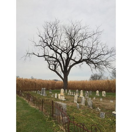 LAMINATED POSTER October Tree Halloween Graveyard Cemetery Poster Print 24 x 36](Halloween Cemetery Fence For Sale)