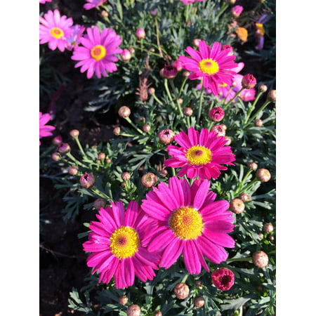 LAMINATED POSTER Red And Yellow Sunshine Flowers Poster Print 24 x 36