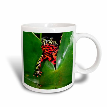 3dRose Fire Belly Toad, Native to China - NA02 DNO0112 - David Northcott, Ceramic Mug, 15-ounce (Fire Bellied Toad)