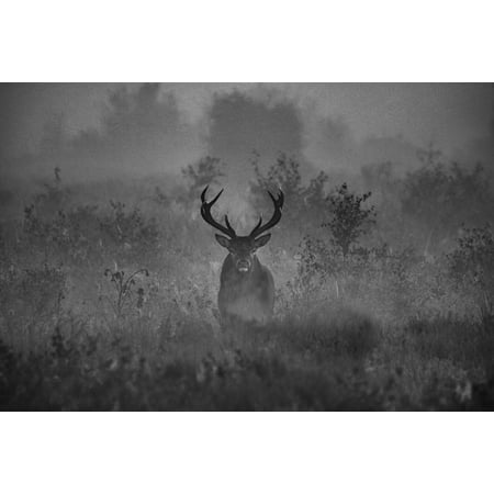 Canvas Print Stag Deer Antlers Woodland Woods Animal Wildlife Stretched Canvas 32 x - Woodland Warrior