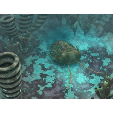 An Olenoides trilobite scurries across a Middle Cambrian ocean floor Canvas Art - Walter MyersStocktrek Images (33 x 25)