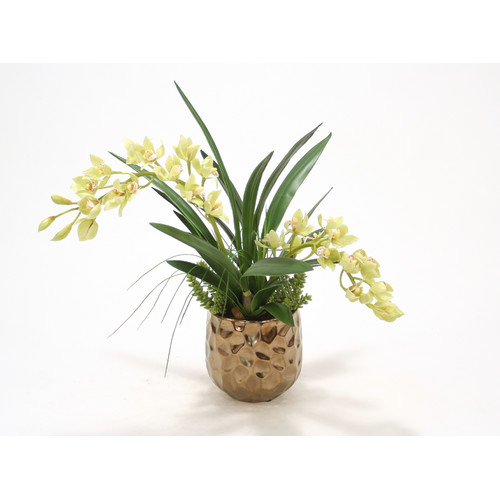 Distinctive Designs Green Cymbidium Orchids in Gabbi Planter