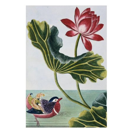 Water Wall Collection (18th Century French Print of Red Water Lily of China II. Print Wall Art By Stapleton)
