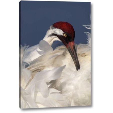 Breakwater Bay 'FL, Lake Kissimmee Whooping crane preening' by Arthur Morris Giclee Art Print on Wrapped Canvas