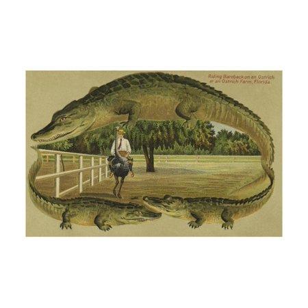 Riding Bareback on an Ostrich at an Ostrich Farm,Florida Print Wall