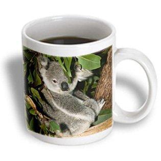 (3dRose Australia, Brisbane, Fig Tree Pocket, Koala Bears-AU01 WBI0119 - Walter Bibikow, Ceramic Mug, 15-ounce)