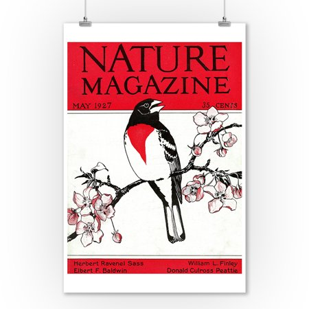 Nature Magazine - View of a Red-Breasted Robin on a Blossoming Branch (9x12 Art Print, Wall Decor Travel Poster)