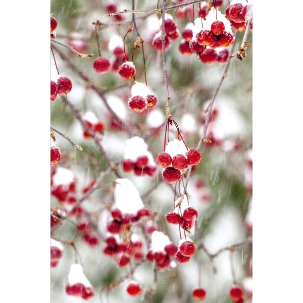 Possible Snowstorm On Christmas 2020 2020 Weekly Planner Winter Berries Red White Christmas Colors