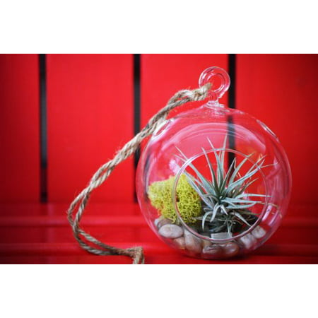 9GreenBox - Air Plant - Terrarium Kit with Moss and Pebbles Pitcher Plant Terrarium