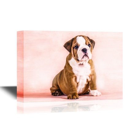 wall26 Dogs Breeds Canvas Wall Art - English Bulldog Puppy - Gallery Wrap Pet Art for Modern Home Decor | Ready to Hang - 24x36 inches