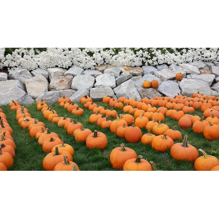October Halloween (LAMINATED POSTER Halloween Pumpkin Orange October Harvest Fall Poster Print 24 x)