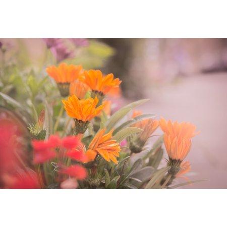 LAMINATED POSTER Blossom Haze Orange Flower Flower Red Orange Poster Print 24 x 36