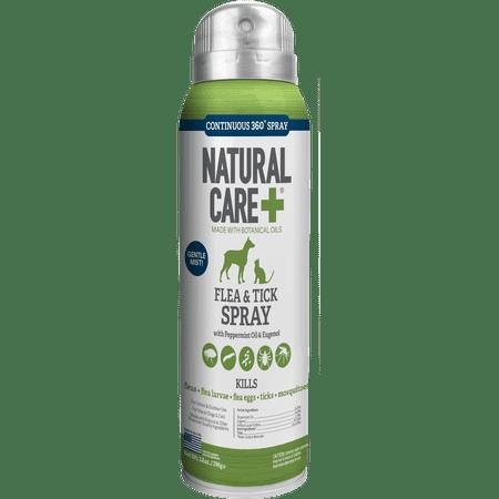 Natural Flea Spray For Furniture And Carpet Carpet