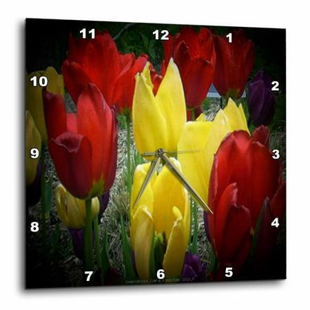 3dRose Red, Yellow and Purple Tulips in Spotlight, Wall Clock, 15 by - Purple Spotlight