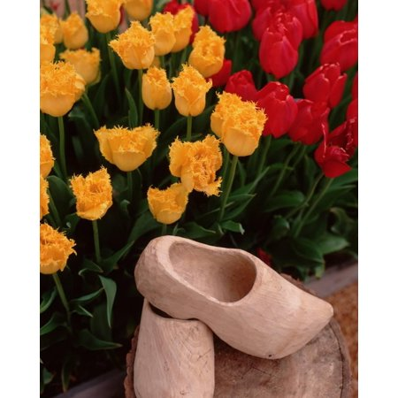 Wooden Shoe Tulips Print Wall Art By Ike Leahy ()