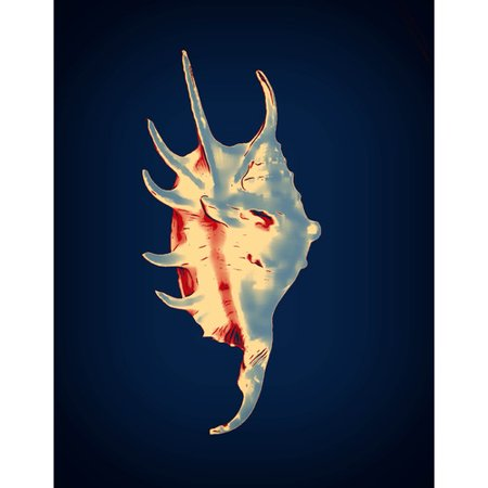 Graffitee Studios Shells Spider Conch Graphic Art on Wrapped Canvas in Blue