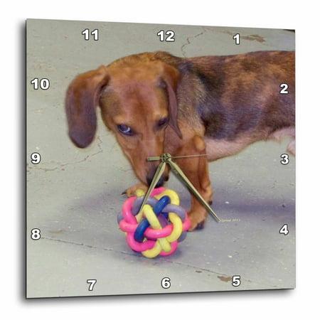 3dRose dachshund, Wall Clock, 13 by 13-inch