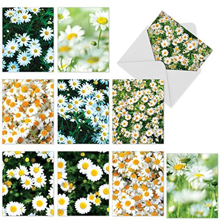 'M6054 OOPSY DAISIES' 10 Assorted Thank You Cards Feature Fields of Sunny Bright Daisies with Envelopes by The Best Card (Assorted Daisies Daisy)