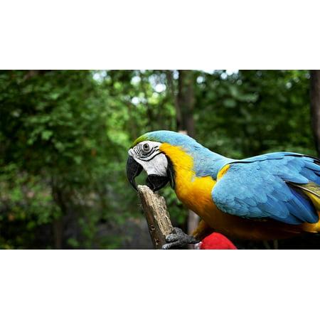 Canvas Print Forest Habitat Trees Bird Parrot Stretched Canvas 10 x 14 (Medium Parrot Tree)